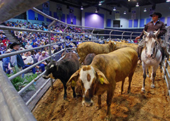 houston dynamic livestock show and rodeo